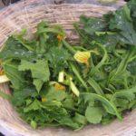 Zucchini Tendrils at Campo dei Fiori