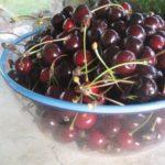 cherry ricotta tart