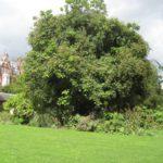 london: gardens + food