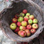 domenico's baked apples