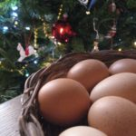 carbonara:  eggs as christmas gift