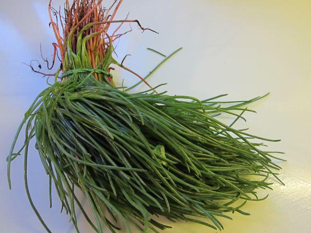 eating grass: agretti frittata