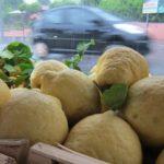 insalata di cedro: citron salad