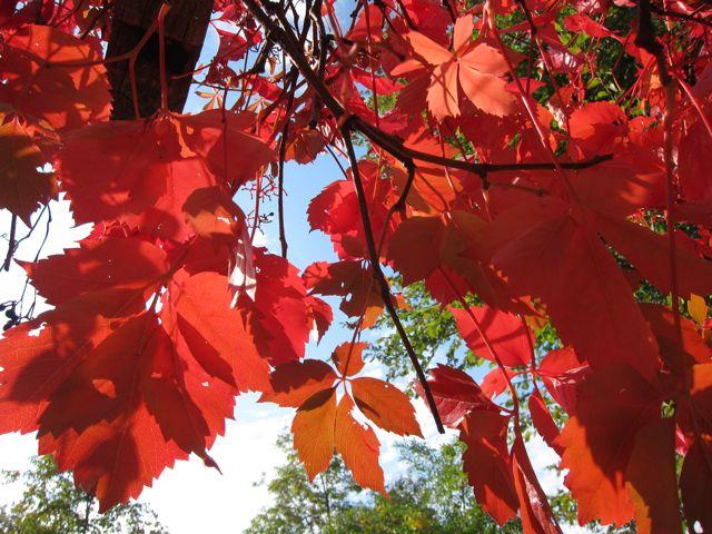 autumn colors in umbria
