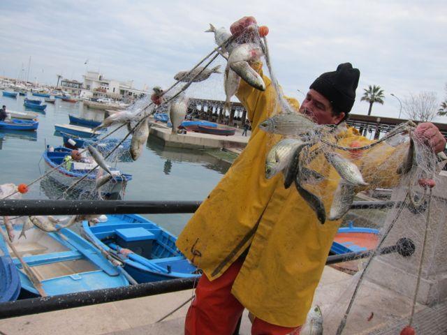 fish market {bari}