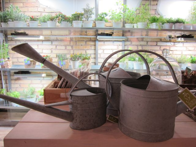 herbs + food  {aromaticus in rome}