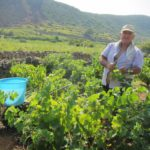 zibibbo grapes {pantelleria}