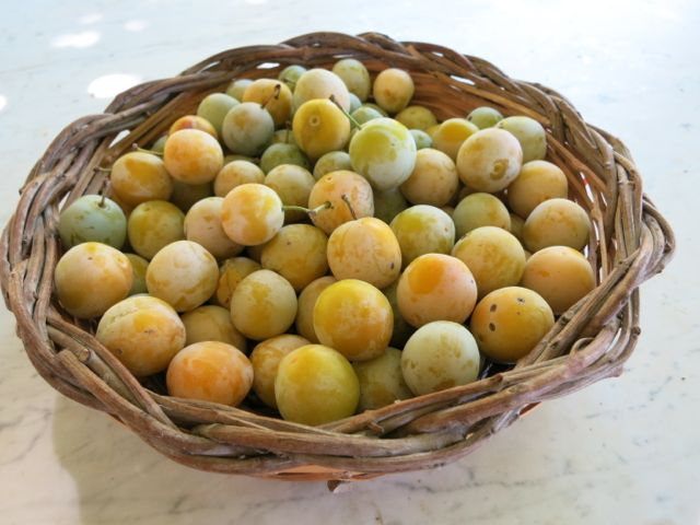 rustic plum tart {evan kleiman pie tutorial}