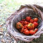 tomato salad {vinegar + shallots}
