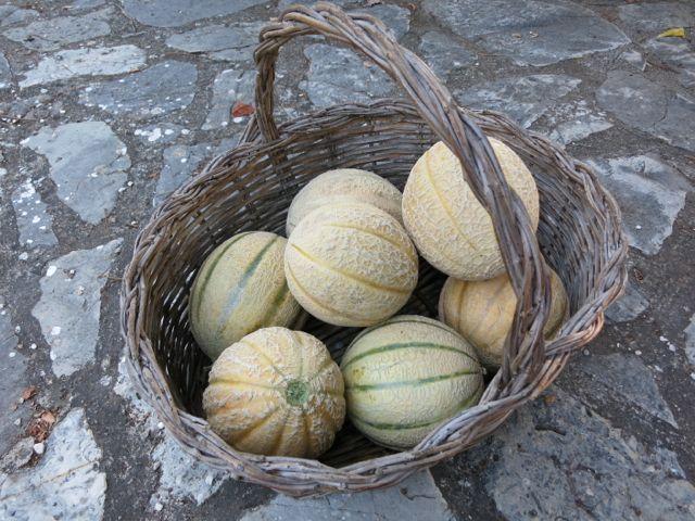 melon + campari {sorbet} - Elizabeth Minchilli in Rome