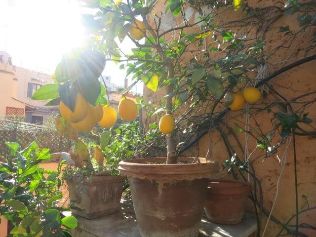 Fennel Salad With Preserved Meyer Lemons Recipes — Dishmaps