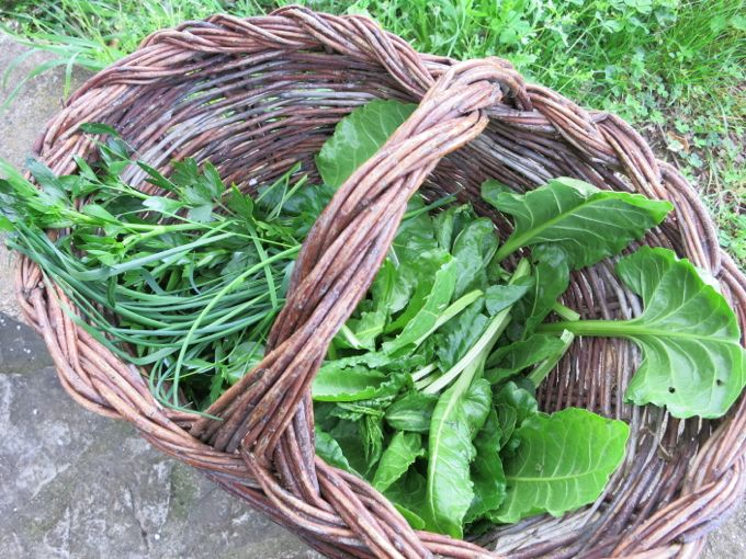 Herbs for Beet and Mozzarella Salad