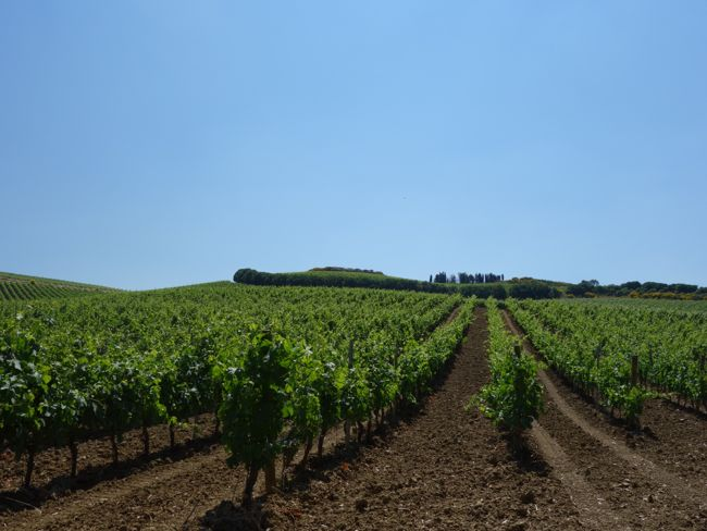 Regaleali Vineyards