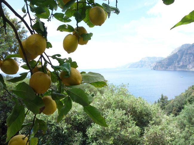 Lemons at Hotel Il San Pietro Positano