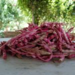 fresh cranberry beans {soup + salad}