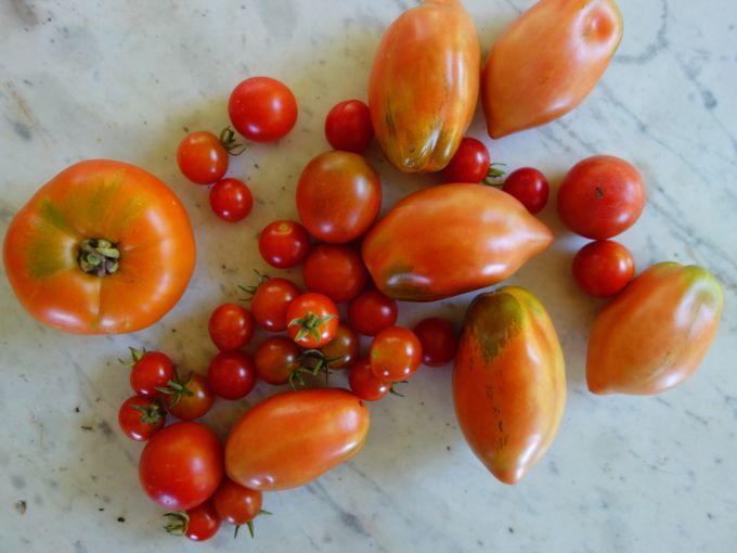 Tomatoes Mozzarella Eggplant Caprese Elizabeth Minchilli In Rome2
