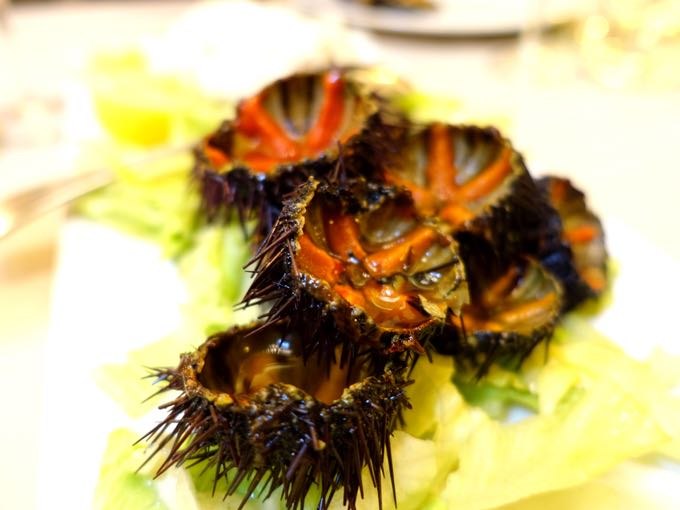 Antiche Mura, Polignano: sea urchins