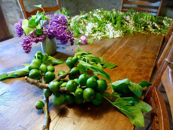 Unripe figs and Acacia Blossoms