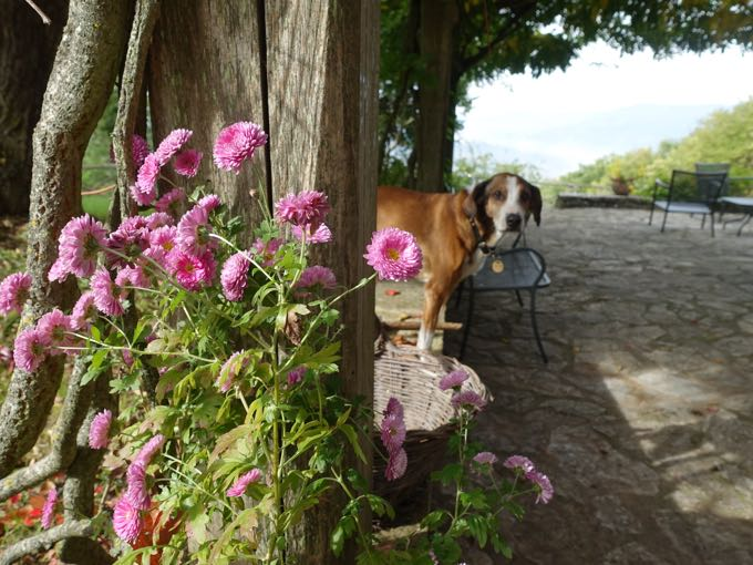 Flowers and Pico, Umbria