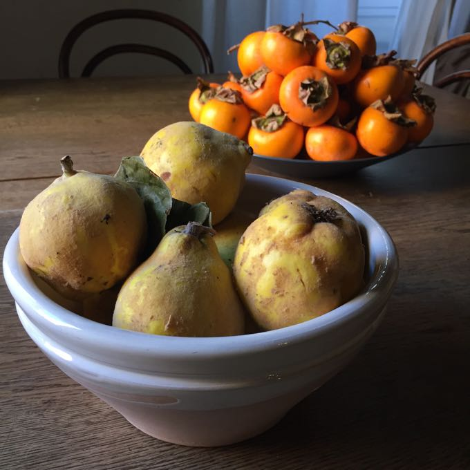 Quince and Persimmons Elizabeth Minchilli