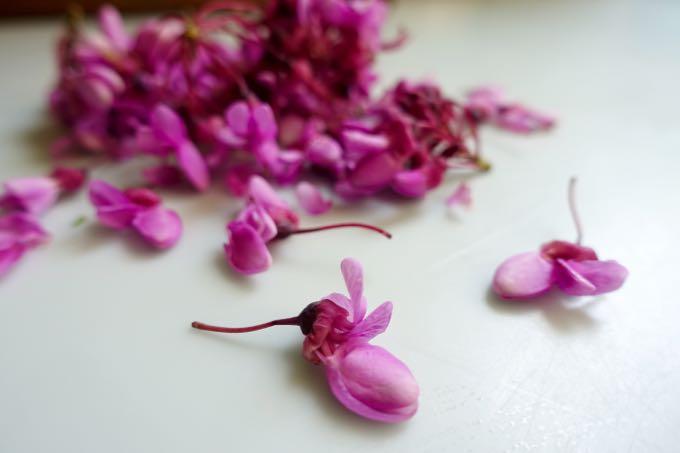 Redbud Blossoms Elizabeth MInchilli