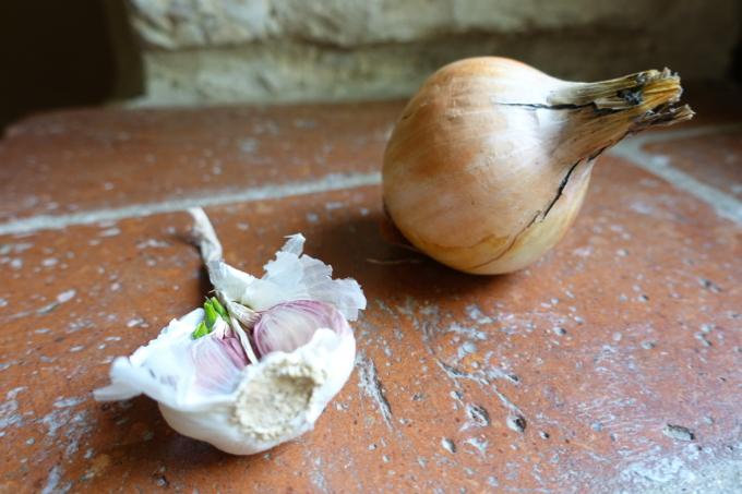 Onion and Garlic Elizabeth Minchilli