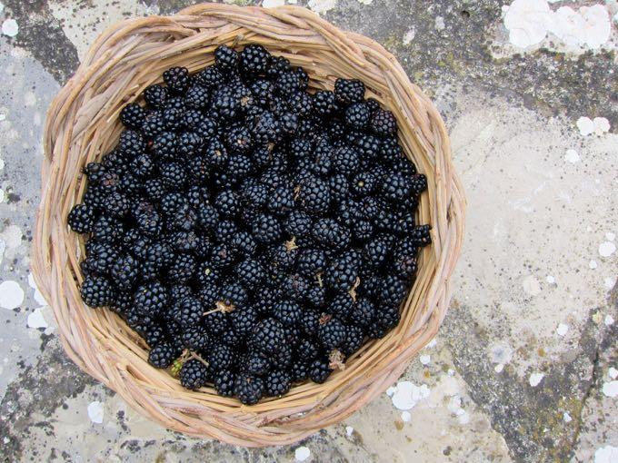 Blackberries - 1