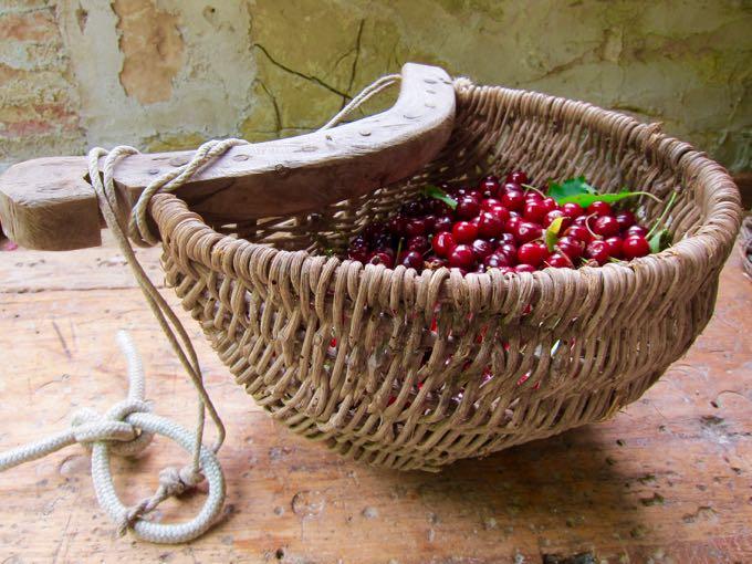 Cherries - 1 (1)
