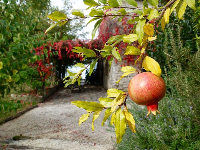 pomegranates-and-kale-salad-
